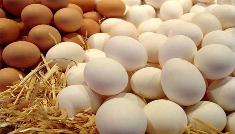نرخ هر شانه تخم مرغ ۳۰ هزار تومان شد